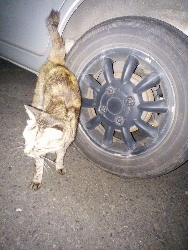夜の鹿島園(温泉)の駐車場は猫がいっぱいいるよ
