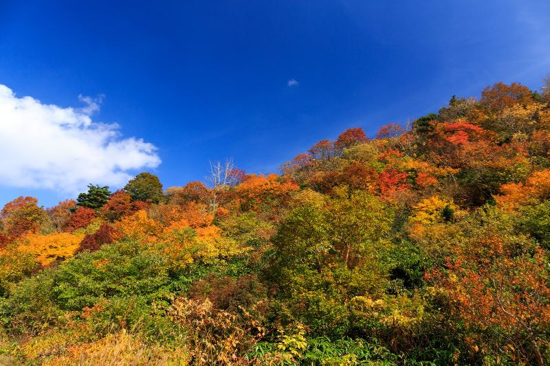 昨日から塩原温泉へ泊まりで来ています。紅葉が綺麗な時期ですね!