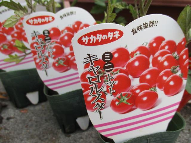 毎年恒例のプチトマトの苗を買ってきました!