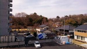 桜 足利 公園