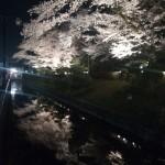 足利の夜桜の名所『鑁阿寺』にライトアップされた桜を見に行ってきました