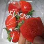 群馬県産の苺『やよいひめ』買っちゃいました!