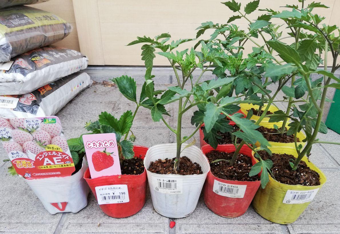 昨年はドタバタして家庭菜園出来なかったので・・・今年はやりますよ!